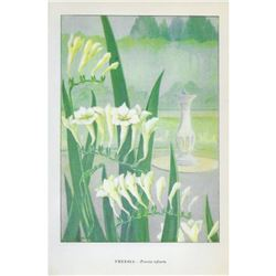 1920's Freesia Color Lithograph Print