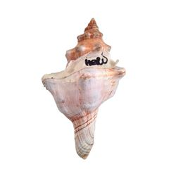 Tulip Fever Jan Van Loos (Dane DeHaan) Seashell Movie Props