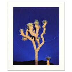 "Robert Sheer, ""Joshua Tree"" Limited Edition Single Exposure Photograph, Numbered and Hand Signed wit"