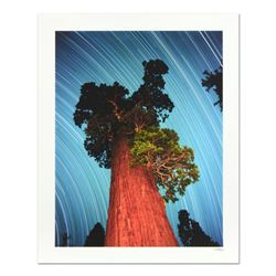 """Robert Sheer, """"General Grant Giant Sequoia"""" Limited Edition Single Exposure Photograph, Numbered and"""