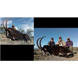 Hunt Package Sable - Sponsord by: Gamka Safaris