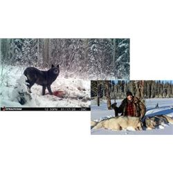 SPECIAL ITEM Hunt Package Timberline Wolf Hunt with  Moose Country Outfitting