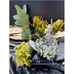 """""""Make Your Own Bowl of Succulents"""": 4 Plants in 3 & 4"""" Pots"""
