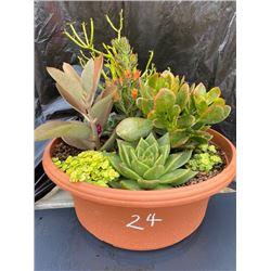 Mixed Succulent Container Garden