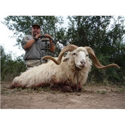 7 DAY ARGENTINA FOR 2 HUNTERS | Texas Dall Ram, Wild Boar & Hybrid Sheep | All Three for EACH Hunter