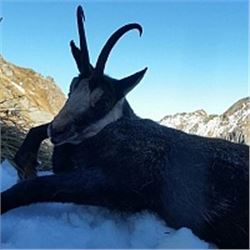 ROMANIA HUNTING OUTFITTERS | Chamois and Roe Deer Combo or Red Stag and Roe Deer Combo, Hunters Choi