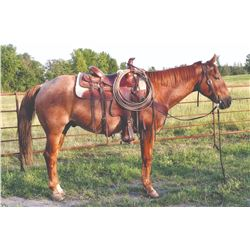 Roany, 2013 QH Red Roan Gelding,  15:0.