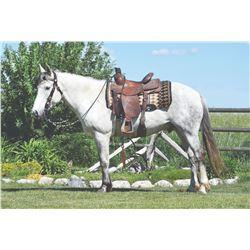 Iggy, 2010 Titled Mustang Grey Gelding,  15:0.