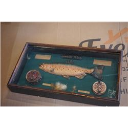 RAINBOW TROUT FLY FISHING SHADOW BOX