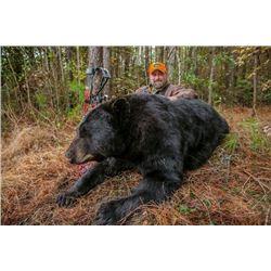 North Carolina Black Bear Hunt Experience with Gus Congemi
