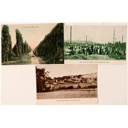 Hopland, CA Postcards (3)  (101796)