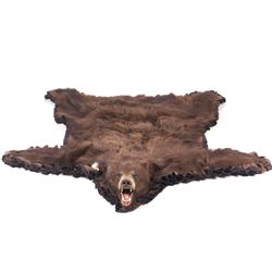Montana Taxidermy Black Bear Rug