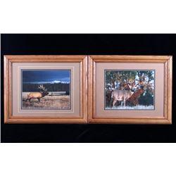 Denver Bryan Elk & Deer Wildlife Framed Photograph