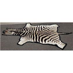 Very Nice Large Taxidermy Zebra Rug
