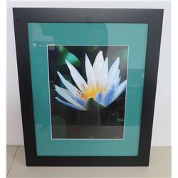 "Framed & Matted Photographic Art, Water Lilly by R.Haili 19""x23"""