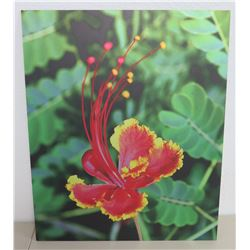 "Red & Yellow Hibiscus Photographic Print on Thin, Rigid Wood Composite Board 19""x23"""