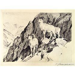 Dall Sheep by Carl Rungius (1869-1959)