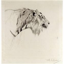 Tiger Head by Friedrich Wilhelm Kuhnert (1865-1926)