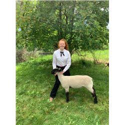 Lydia vanDalen - Blue Ribbon Market Lamb (Weight: 140)