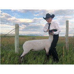 Eli Johnson - Blue Ribbon Market Lamb (Weight: 122)