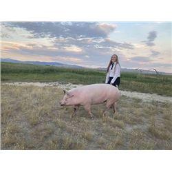 Tyler Gibson  - Red Ribbon Market Hog (Weight: 318)