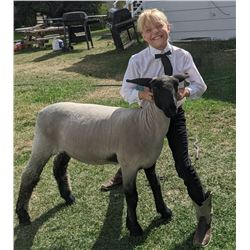 Isabell McQuiston - Blue Ribbon Market Lamb (Weight: 126)