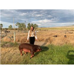 Samantha Anderson  - Blue Ribbon Market Hog (Weight: 288)
