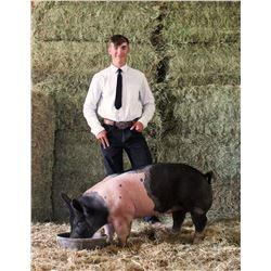David Schmidlin - Blue Ribbon Market Hog (Weight: 245)