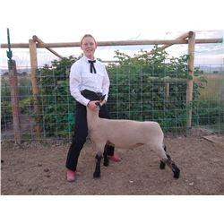 Samantha Steadman - Blue Ribbon Market Lamb (Weight: 124)