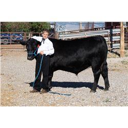 Tucker Sitz  - Blue Ribbon Market Beef (Weight: 1515)