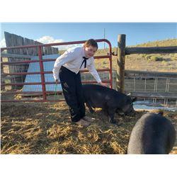 Garrett O'Brien - Red Ribbon Market Hog (Weight: 258)