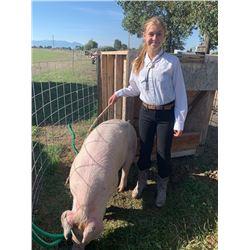 Ellie Weldon  - Red Ribbon Market Hog (Weight: 302)