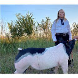 Autumn VandeSandt - Blue Ribbon Market Hog (Weight: 229)