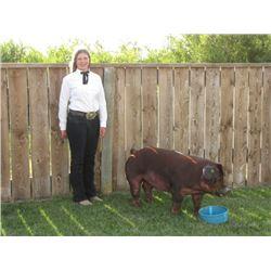 Molli Miner - Blue Ribbon Market Hog (Weight: 267)