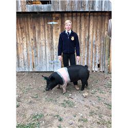 Asher Voss, FFA  - Blue Ribbon Market Hog (Weight: 286)