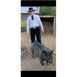 Kale Schonsberg  - Blue Ribbon Market Hog (Weight: 280)