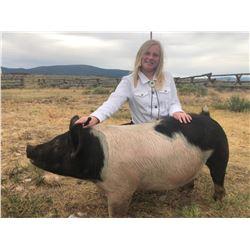Bridget Lovaas  - Blue Ribbon Market Hog (Weight: 312)