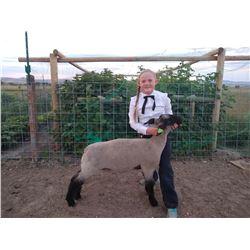 Lizzy Steadman - Blue Ribbon Market Lamb (Weight: 127)