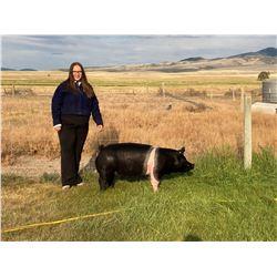 Tori Ann Anderson, FFA  - Blue Ribbon Market Hog (Weight: 271)
