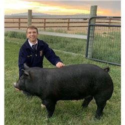 Trapper Doering, FFA - Red Ribbon Market Hog (Weight: 260)