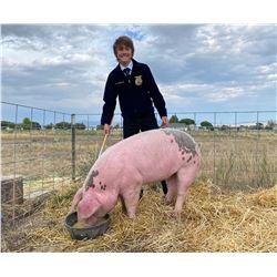 Brock Hansen, FFA  - Red Ribbon Market Hog (Weight: 315)