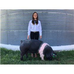 Riley McCoy  - Blue Ribbon Market Hog (Weight: 289)