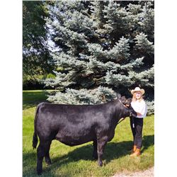 Aven Pflieger  - Blue Ribbon Market Beef (Weight: 1365)