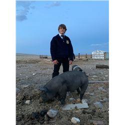 Noah Huffaker, FFA - Red Ribbon Market Hog (Weight: 239)