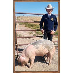 Cord Hahnkamp, FFA  - Red Ribbon Market Hog (Weight: 338)