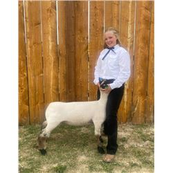 Kenndyl Meine - Blue Ribbon Market Lamb (Weight: 121)