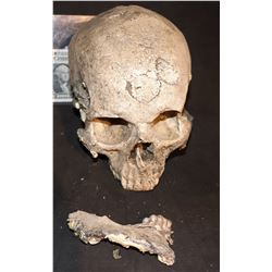 TERMINATOR 2 JUDGEMENT DAY SCREEN USED FUTURE WAR SKULL WITH JAW
