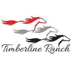 Family Pass for Four (4)  to 2021 Timberline Country Christmas