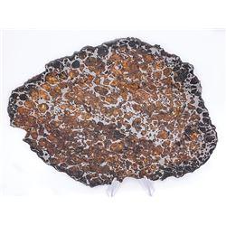 Brahin Pallasite Meteorite Full Slice