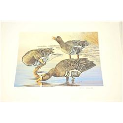 Huge lot of 32 numbered waterfowl stamp  prints by famous artists including David  Maas, Tom Hirata,